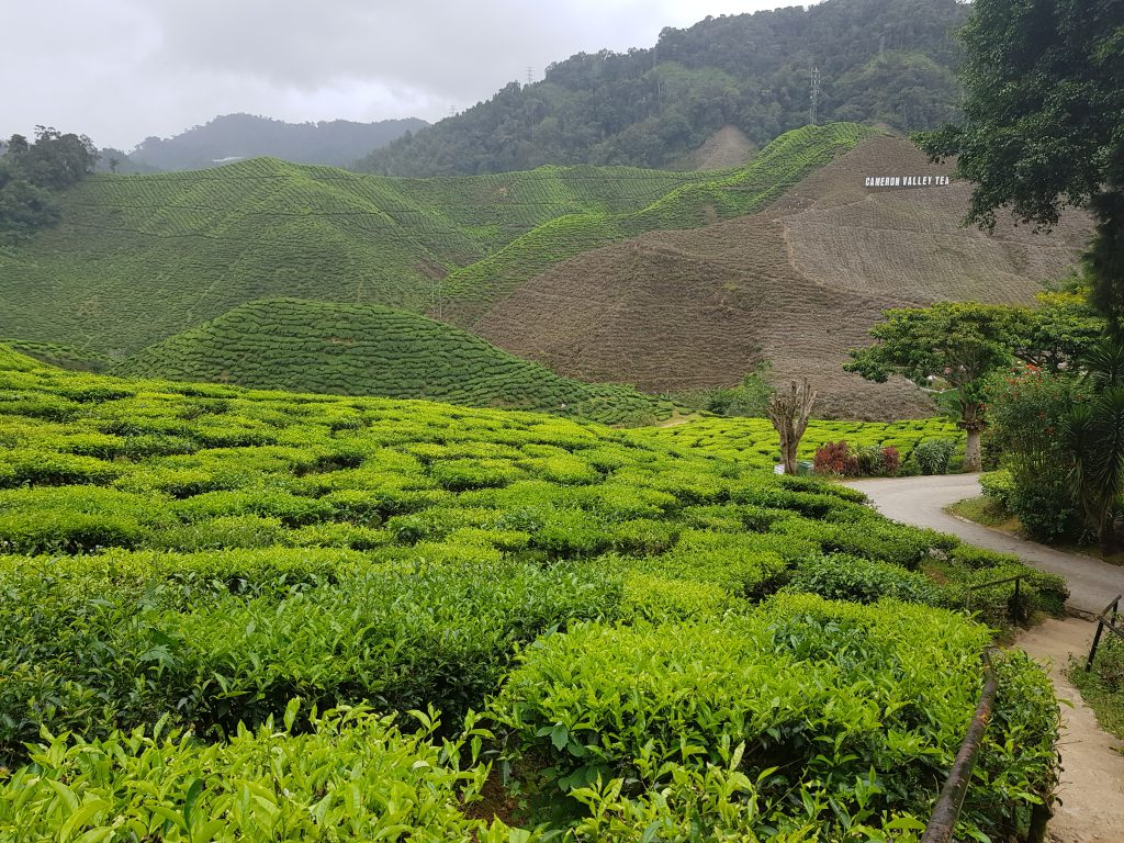 Cameron Highlands in Malaysia Teeplantagen