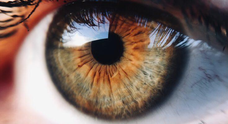 Auge blickt
